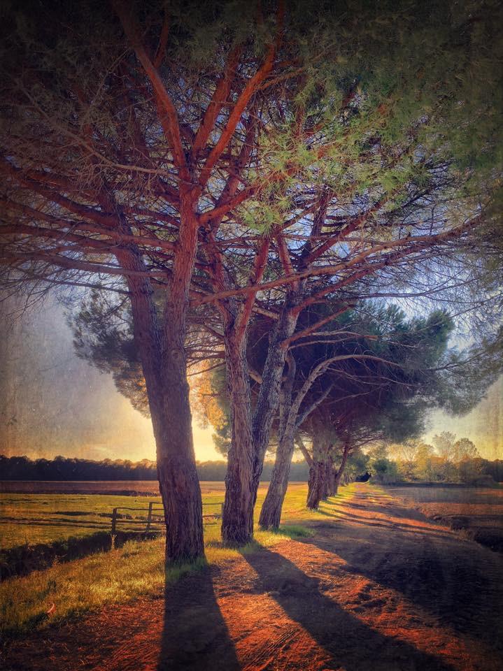 Landscape 1196