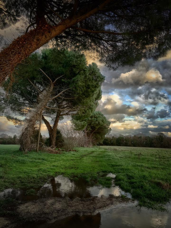 Landscape 1126