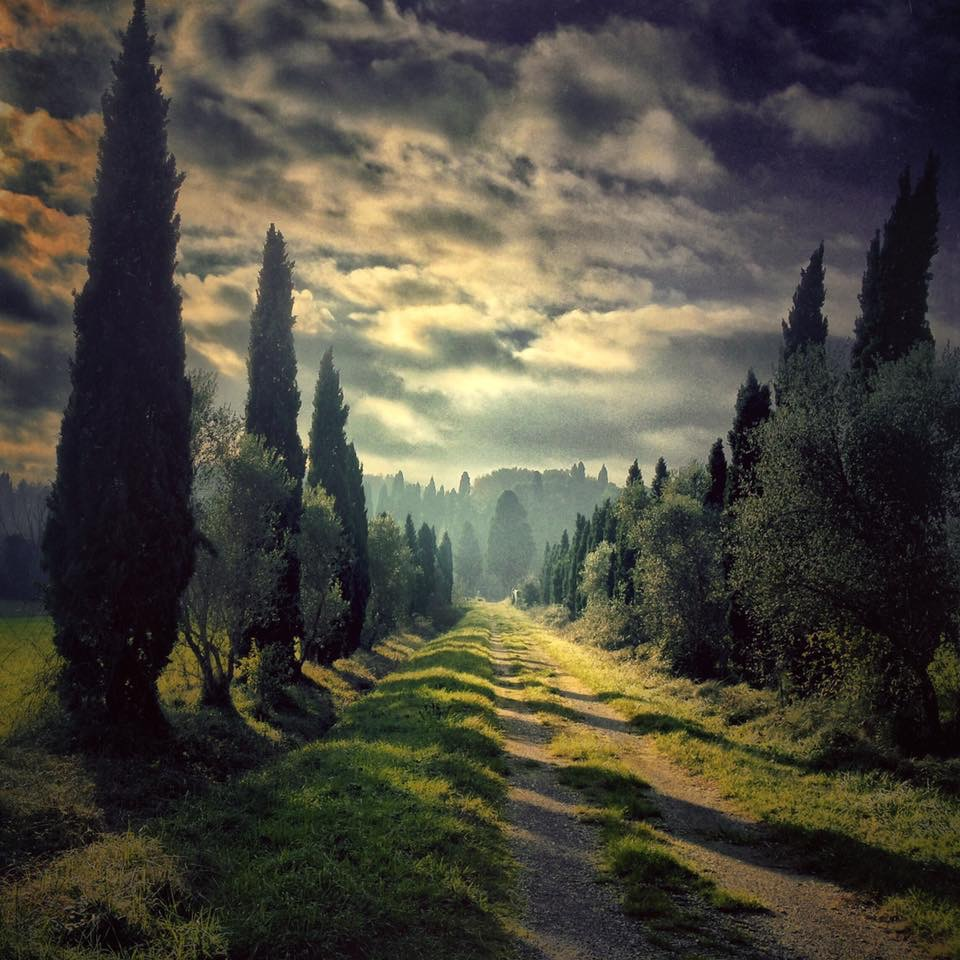 Landscape 976 Cypresses and storm