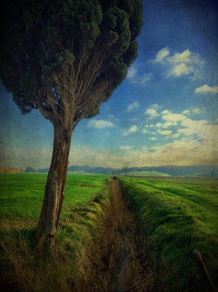 Landscape 871 Cypress