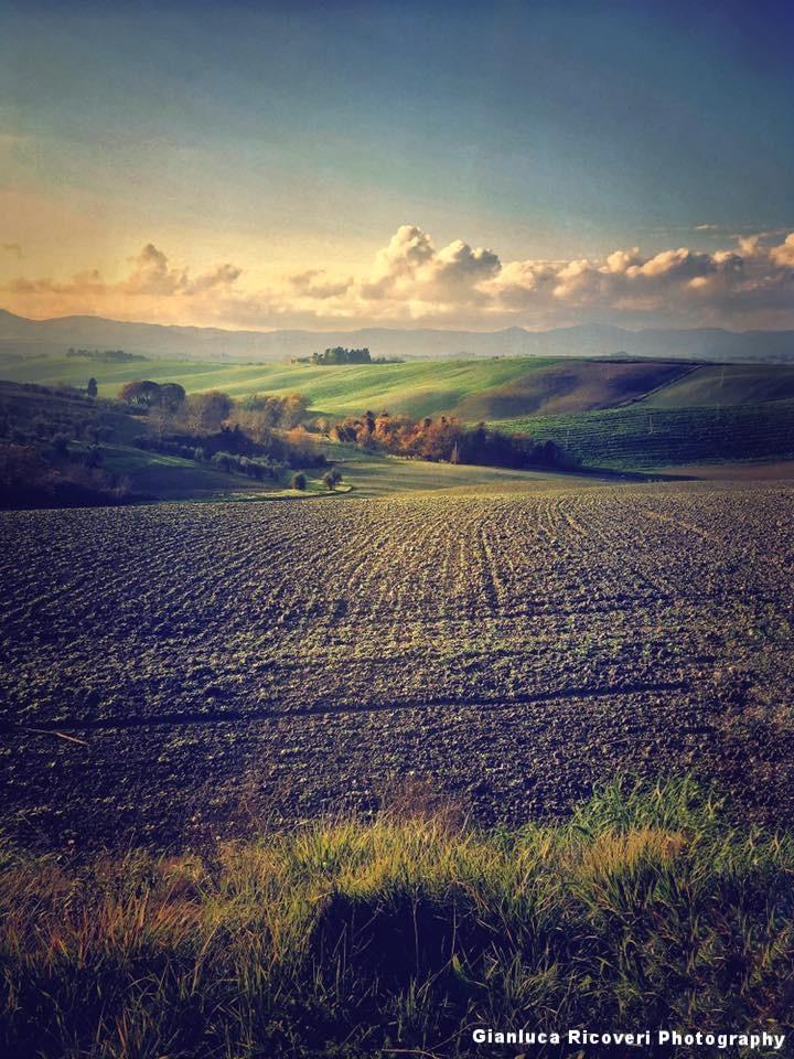 Landscape 1014 Val d'Orcia Hills
