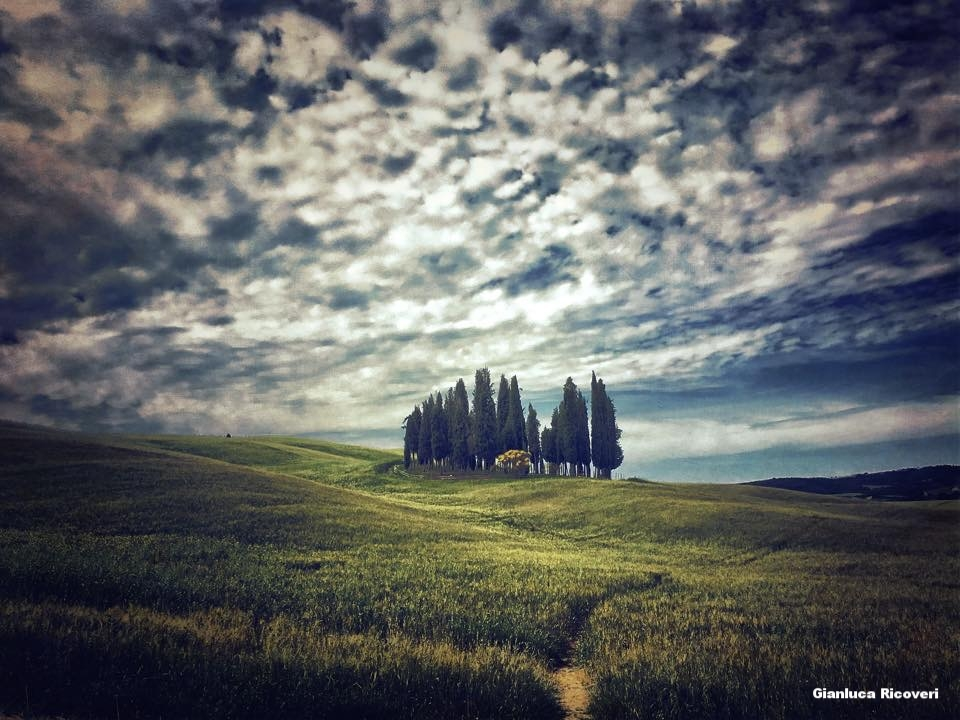 Landscape 1130 Val d'Orcia Cypresses