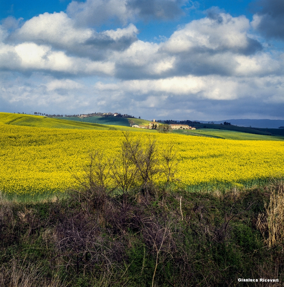 Tuscany's hills in Colours # 2