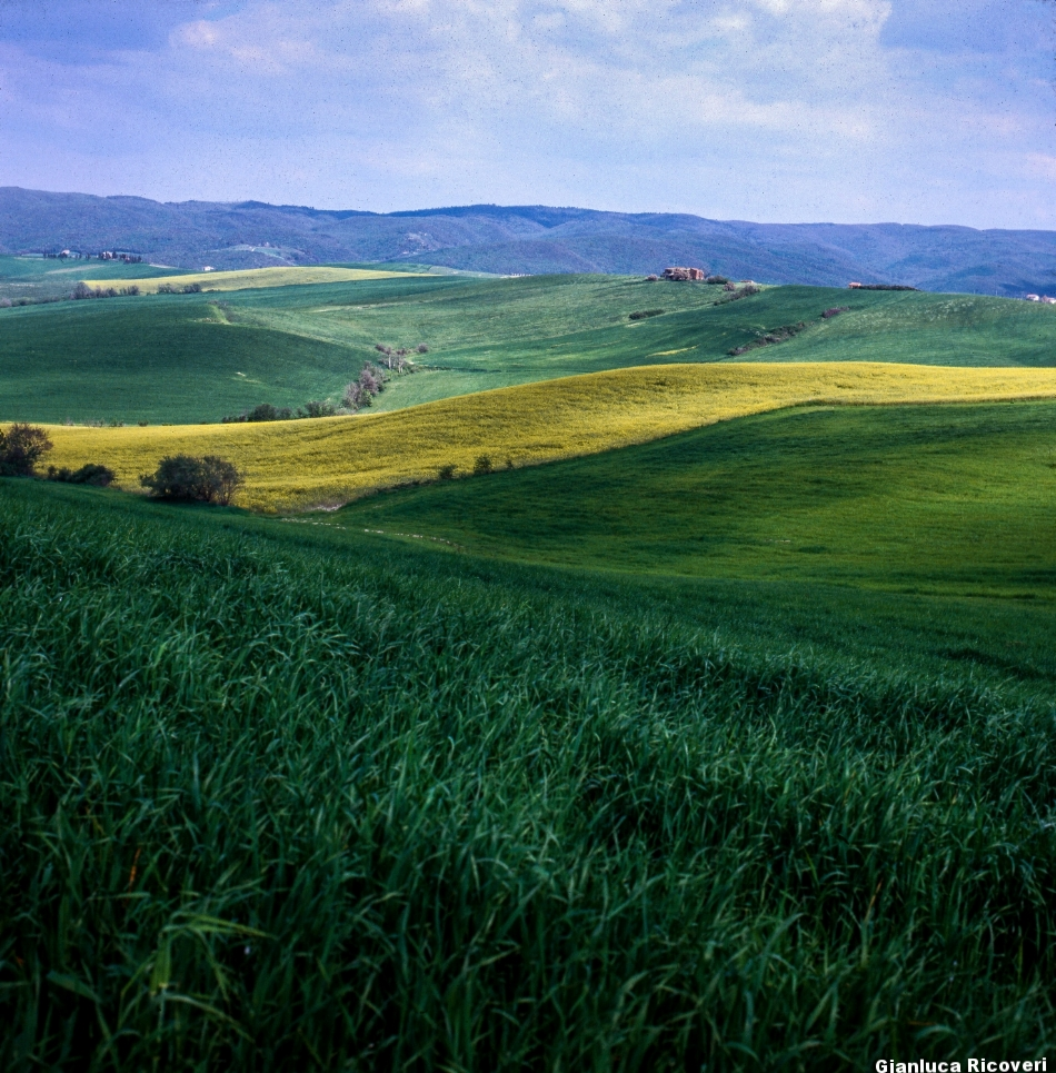 Tuscany's hills in Colours # 12