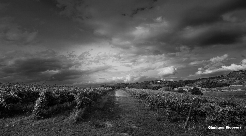 Tuscany's hills in B&W # 07