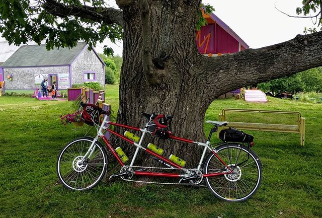 Massive oak vs coupled Erickson tandem (with Canadian paint scheme): which is more majestic?  #tandemcycling #tandembike #cycling