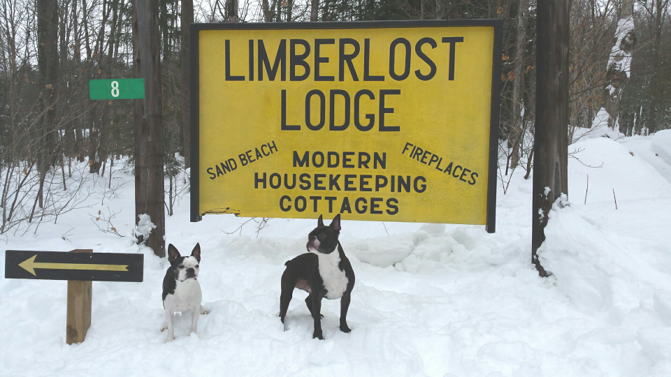 Mascots of Limberlost.png
