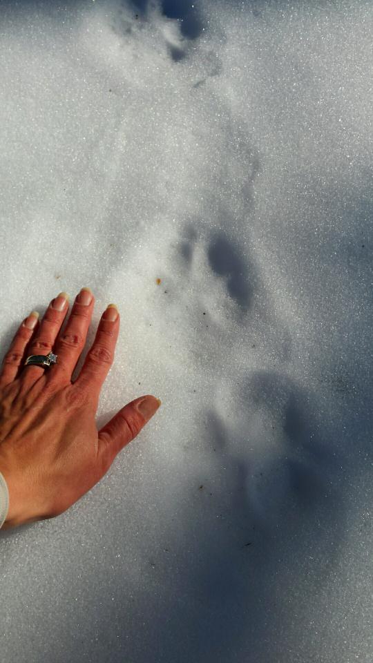 Cat Tracks.png