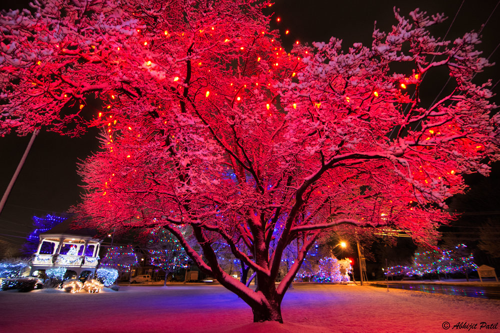 Snow_Dec_16_3.jpg