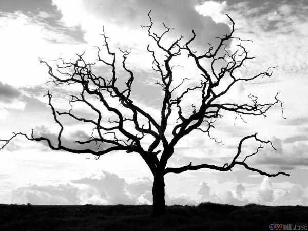 dead tree.jpeg