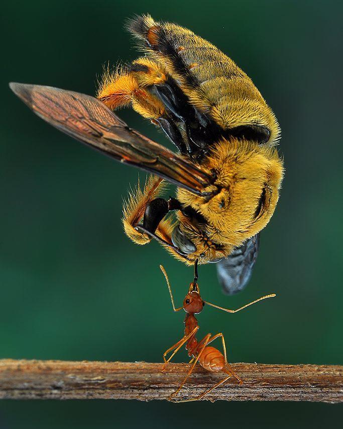 eko adiyanto indonesian macro photography insects 01.jpg