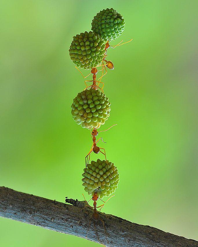 eko adiyanto indonesian macro photography insects 02.jpg