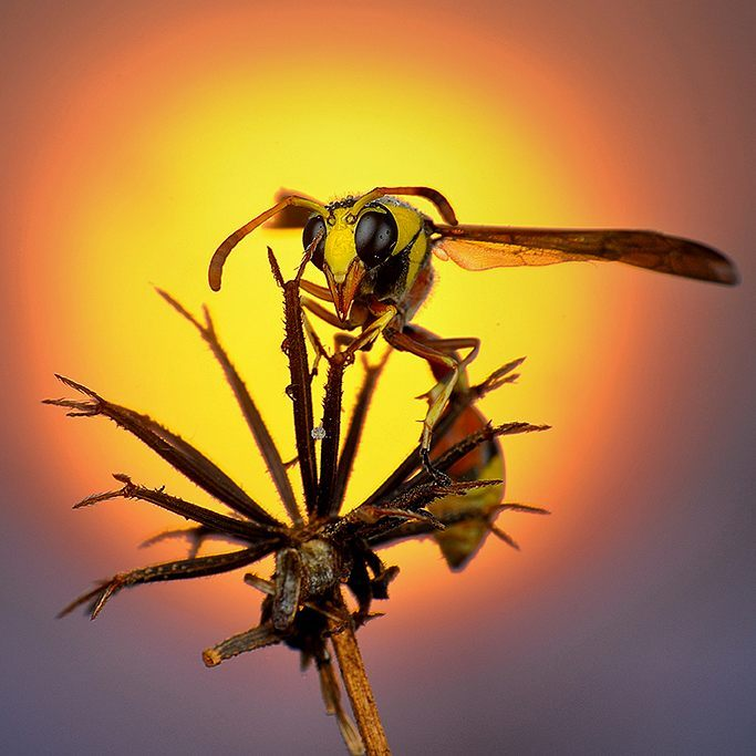 eko adiyanto indonesian macro photography insects 04.jpg