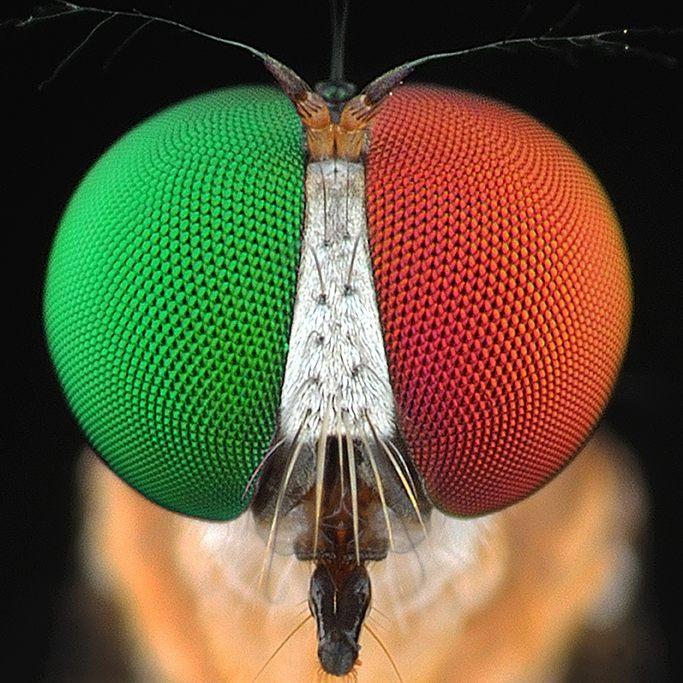 eko adiyanto indonesian macro photography insects 06.jpg