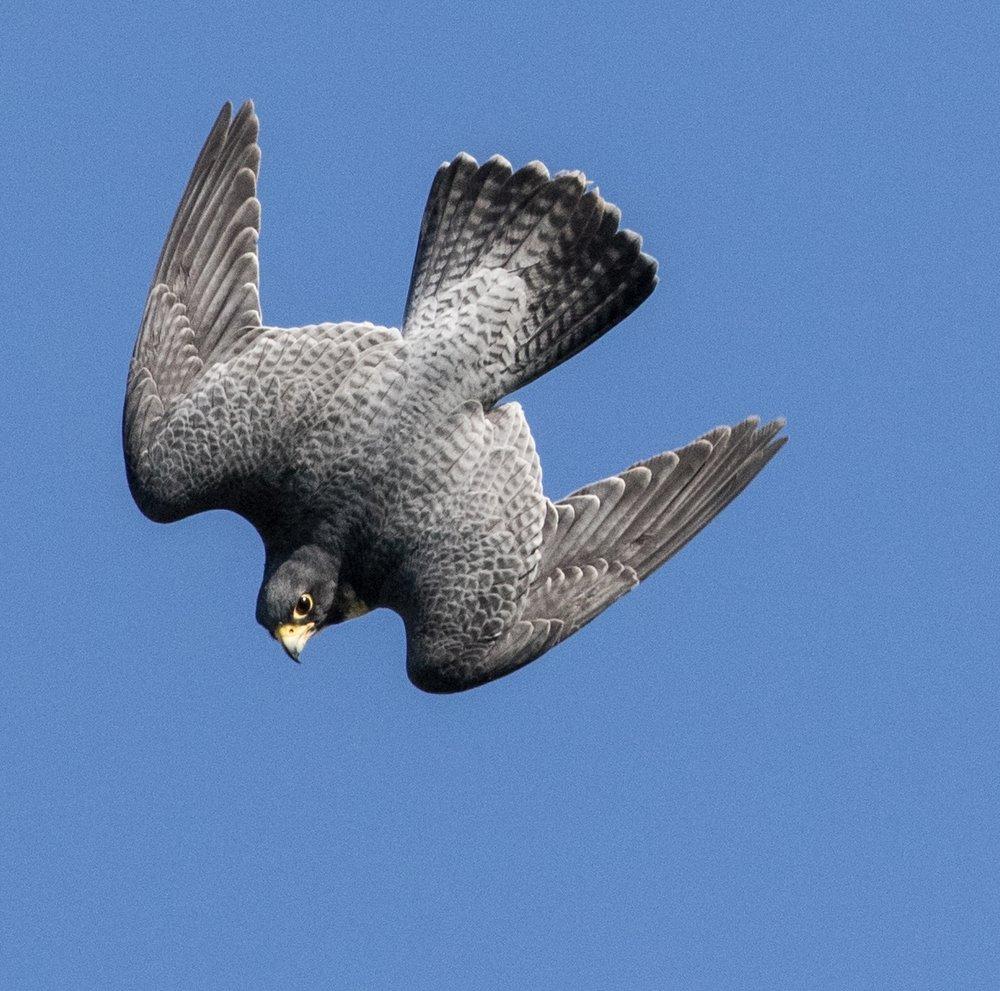robs bird 3.jpg