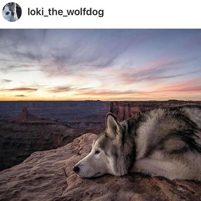 "We agree with Loki 🐶 ""Maybe it won't work out. But maybe seeing if it does will be the greatest adventure..."" Come give getting happy with us on a retreat a go. Don't just be happy. Get happy with Fit Haven Retreats. @loki_the_wolfdog #repost ❤️ . . . . ."