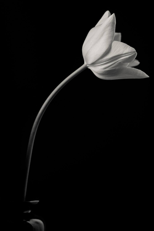 flowers-394.jpg
