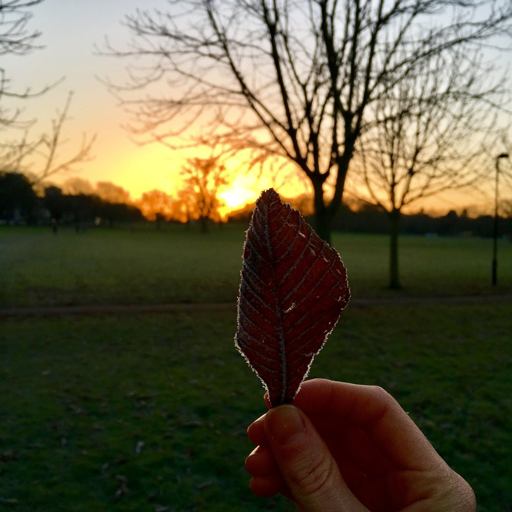 A grogeous post yoga sunrise across Peckham Rye
