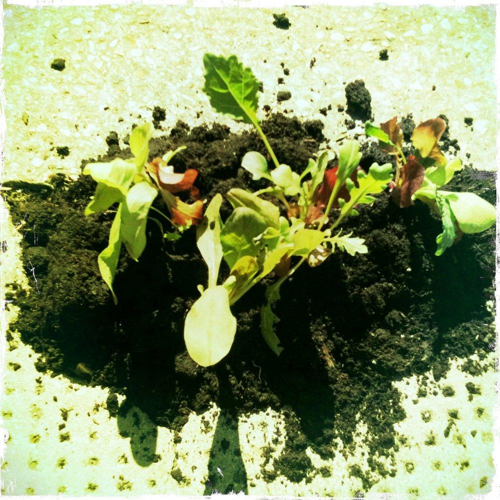 Pothole veggie garden