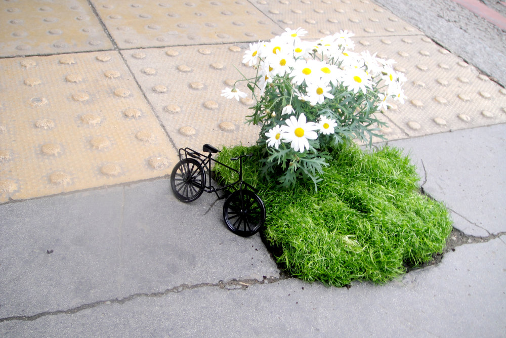 pothole garden bike south london mini garden road steve wheen people looking daisy