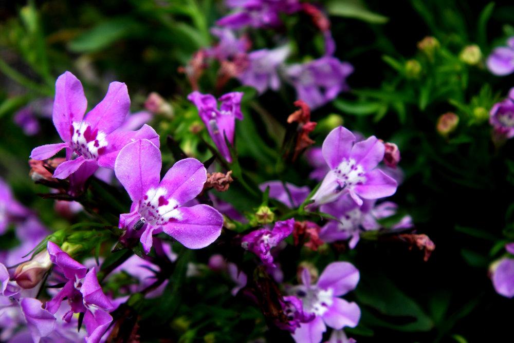cu of flowers