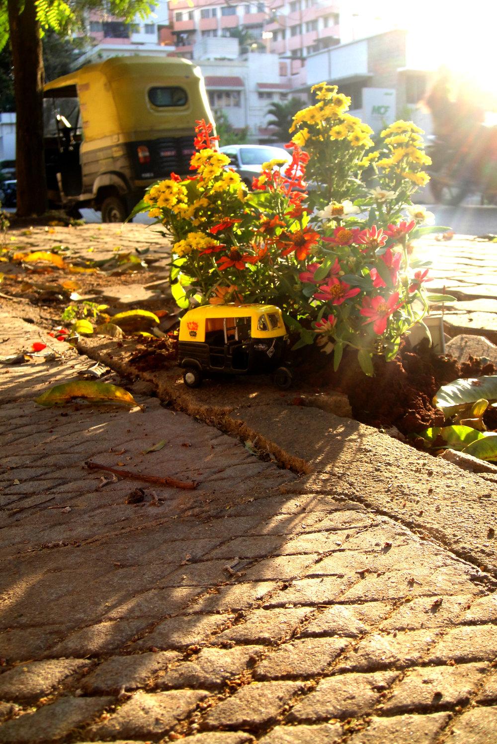 Pothole gardener steve wheen guerilla gardening India Tuk Tuk