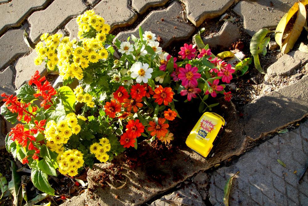 Pothole gardener steve wheen guerilla gardening India Tuk Tuk flowers