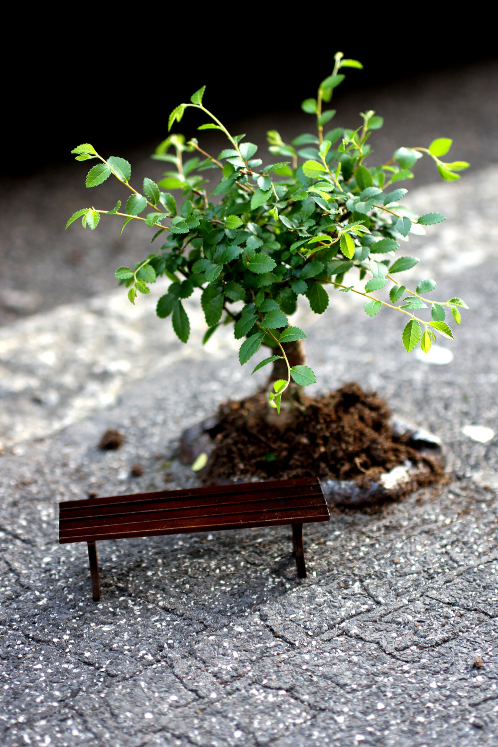 Pothole gardener at Milan Design Week Bonsai dreaming