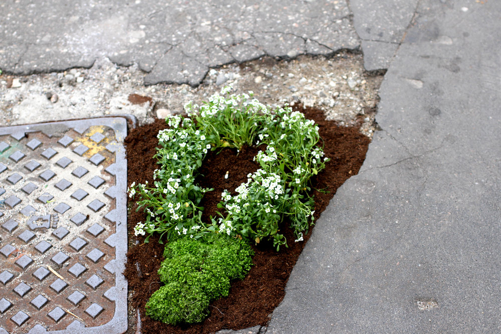 Pothole gardener at Milan Design Week lightbulb moment