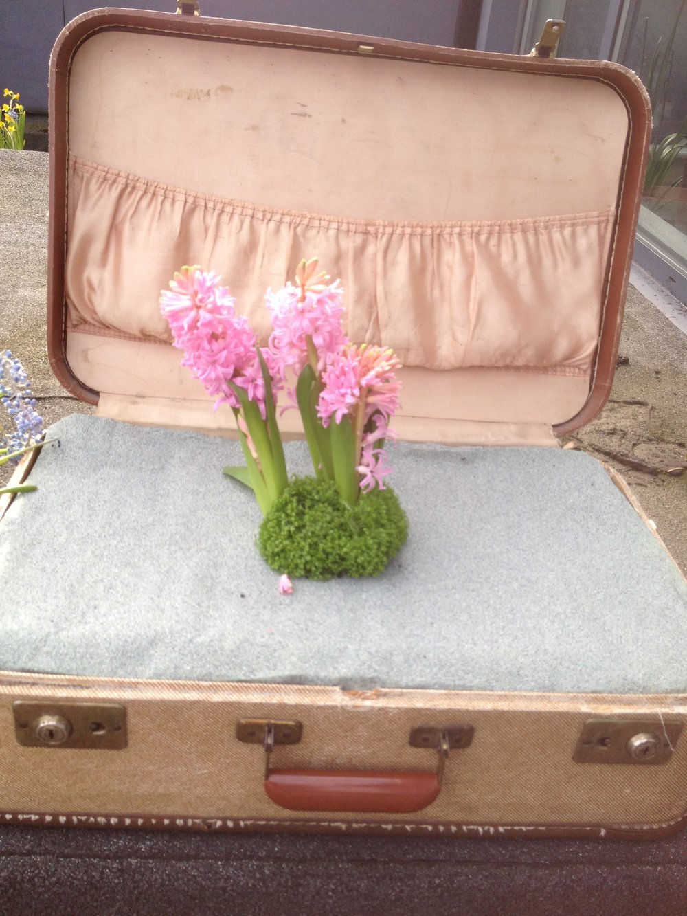 pothole garden in suitcase