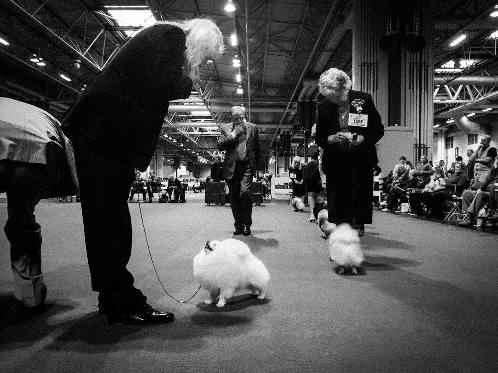 the-dog-show-3.jpg