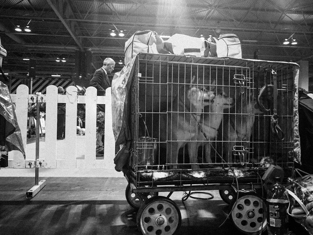 the-dog-show-13.jpg