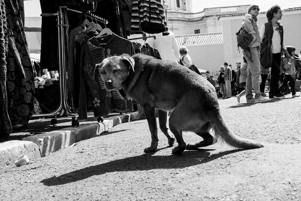 streets-of-lisbon-11.jpg