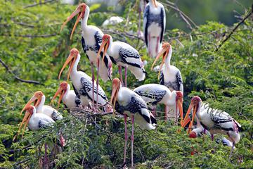 bharatour bird.jpg