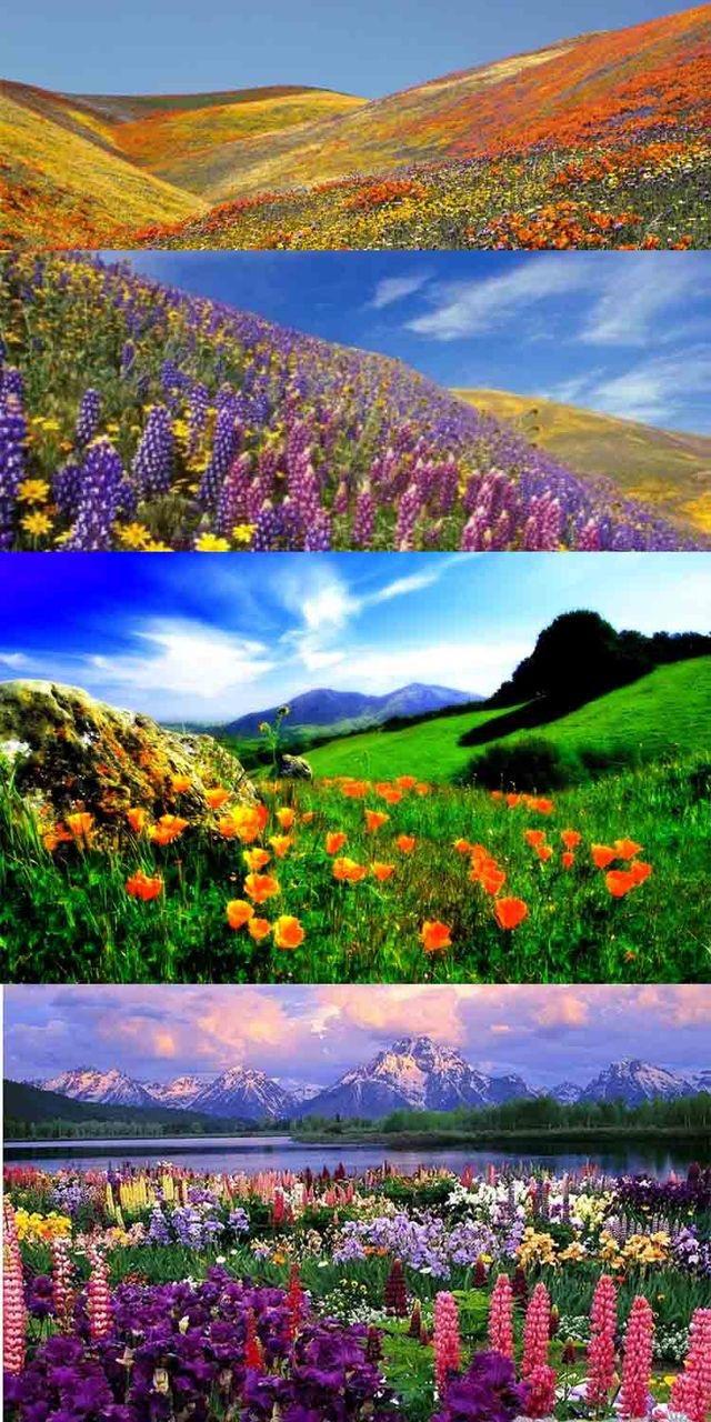 Image source: Himalayanadventurejourney.com