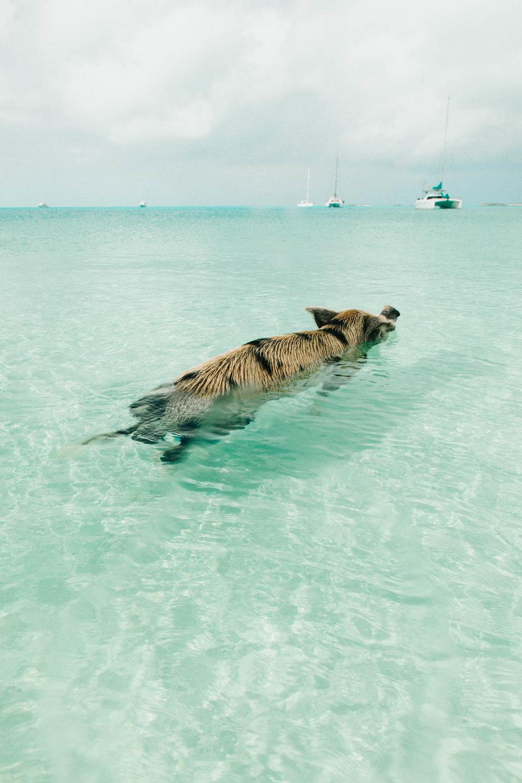 lars bahamas (37 of 39).jpg