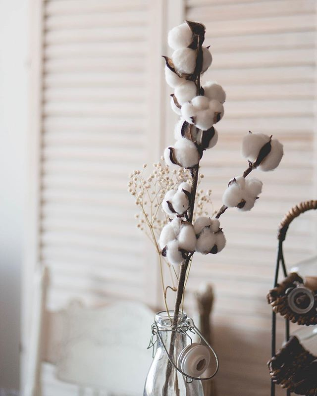 The simplicity of cotton stems 😍 I love the way they look in my home! I learned recently that real cottonwood has a smell. Do any of you know what that smells like??