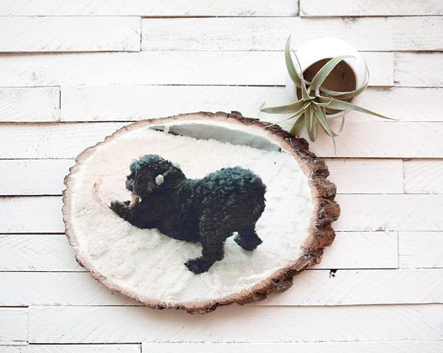 Today's the last day of the giveaway contest!! It's a super easy contest to enter and you could win a custom wood transfer like this as well as other super cute items!  Go to my giveaway post, like it and follow all the makers. Tag your friends for more entries. That's it! Go to my last post ➡️