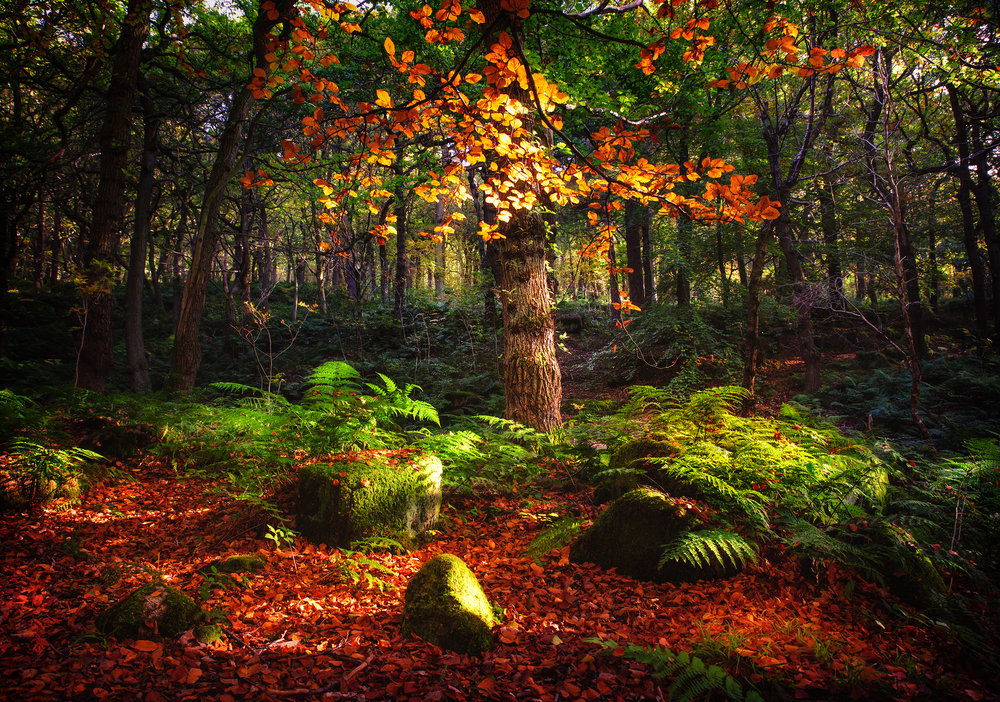 Woodland magic