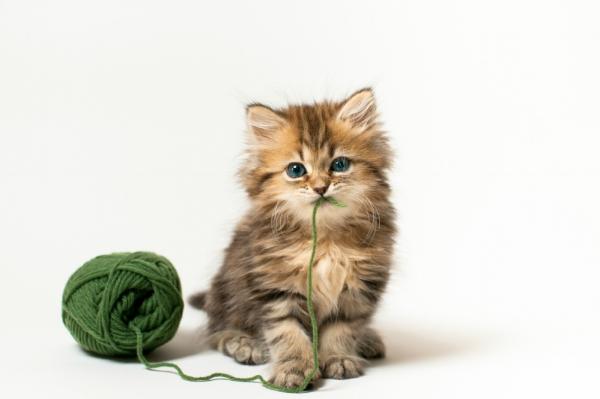 takk katt.jpg