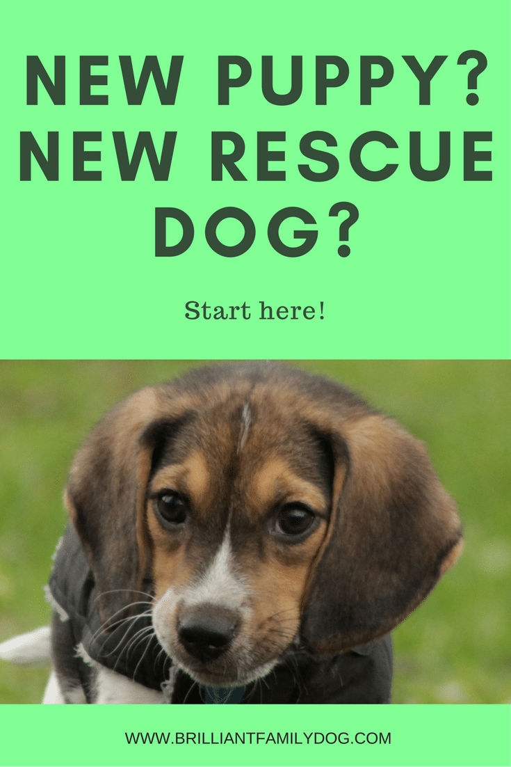 New Puppy? New Rescue Dog? Start here!