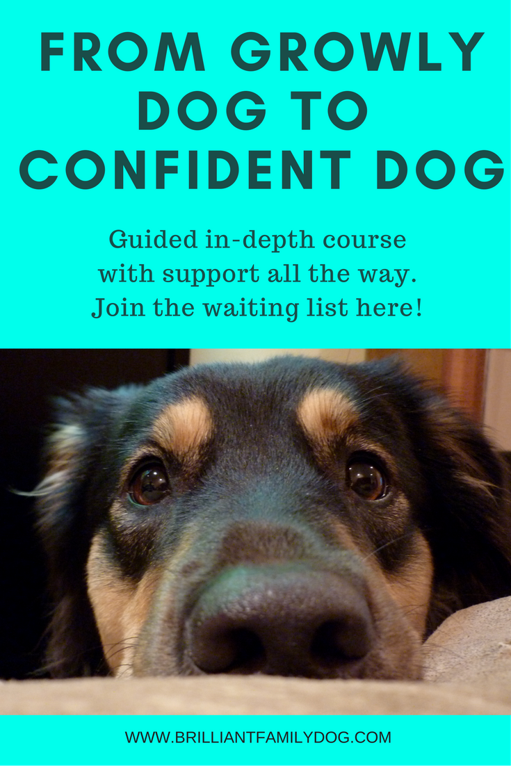 From Growly Dog to Confident Dog training course.png