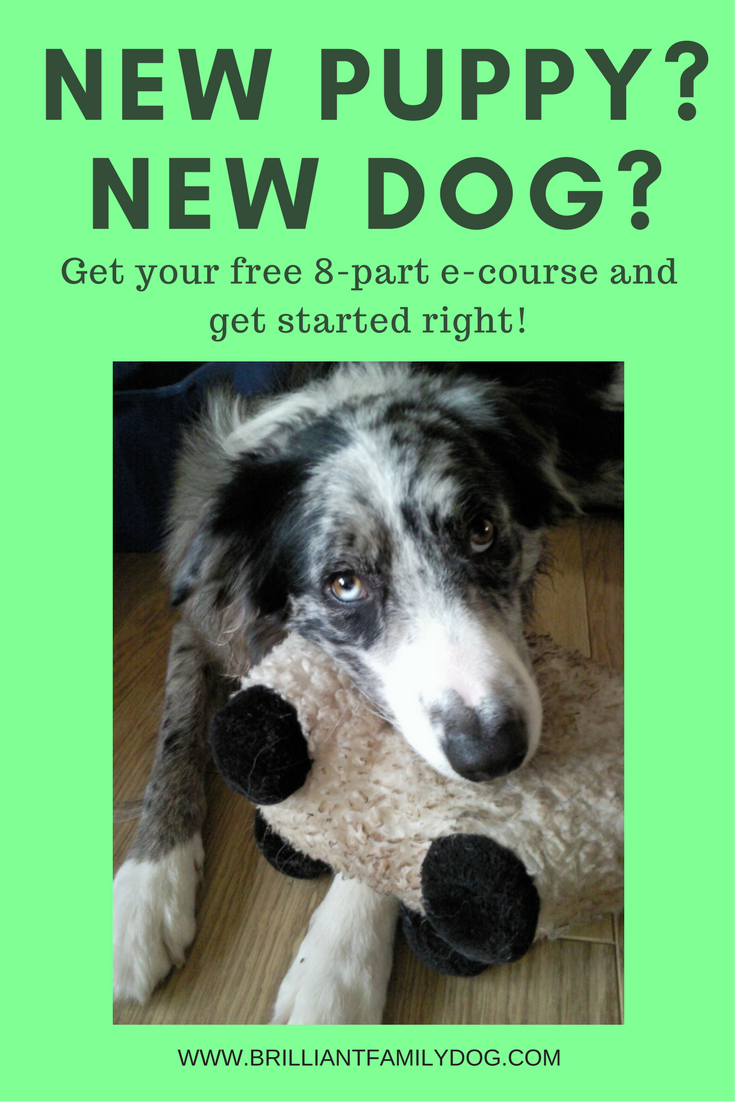 New Puppy? New Dog? Free e-course for you here!