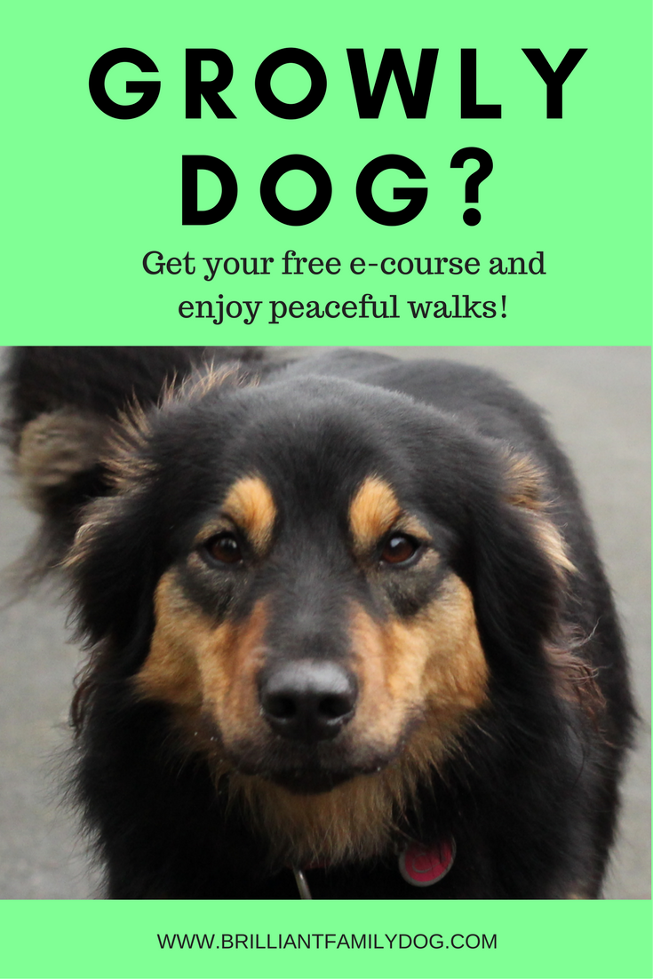Growly Dog? Reactive or aggressive dog? Free e-course for you!