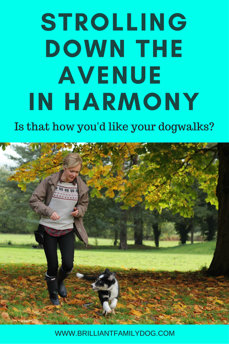 Strolling down the avenue in harmony with your dog