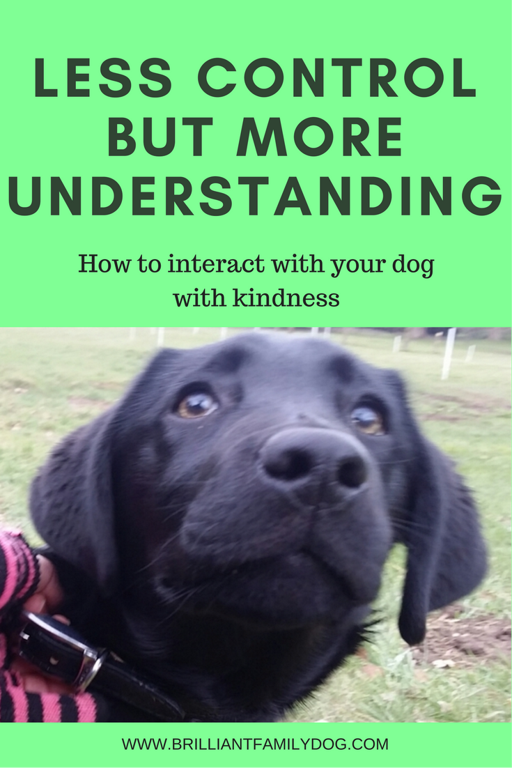 Train your dog with understanding, not control