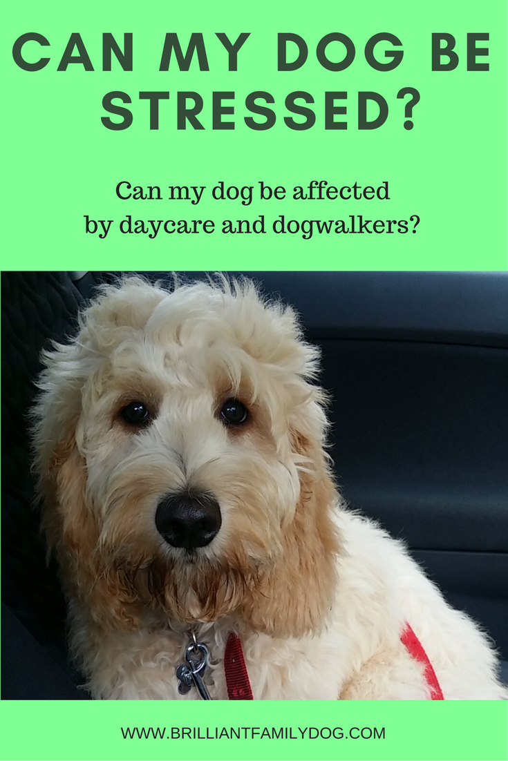 The thorny subject of daycare and dogwalkers