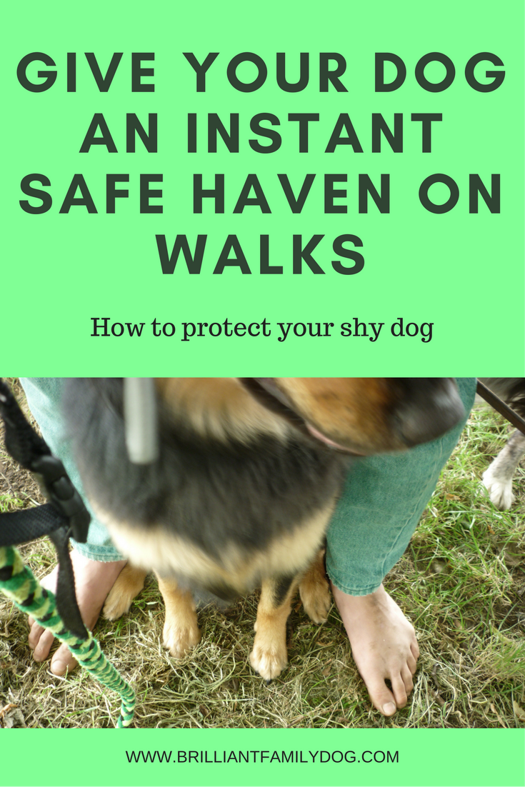 A safe haven for your dog when out