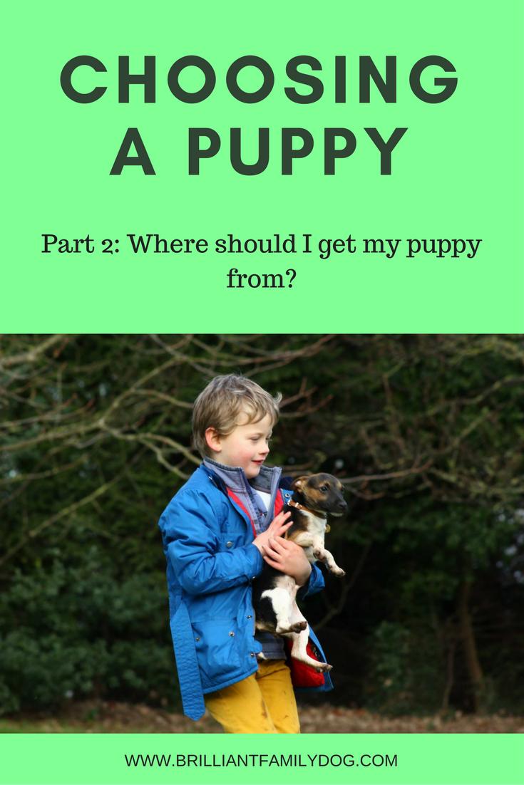 Choosing a puppy Part 2