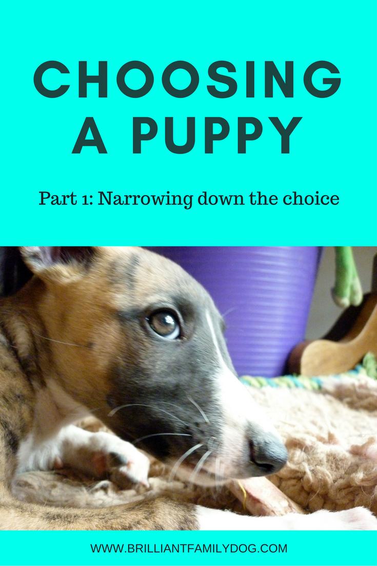 Choosing a puppy Part 1